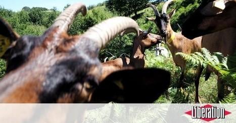 L'Ariège à la flaveur du bio | Agriculture bio | Scoop.it