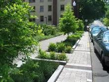 The Economics of Investing in Green Solutions to Stormwater Management | Tree Preservation Planning | Scoop.it