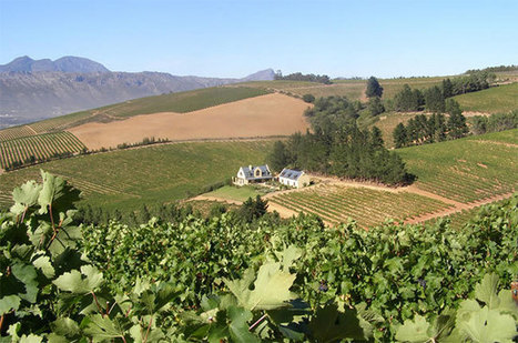 Anson: South African wine after apartheid - One man's story - Decanter | Wine from Down Under | Scoop.it