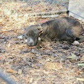 Couple Gets Jail Time for Starving Pregnant Dog | Blog | PETA Latino | Nature Animals humankind | Scoop.it