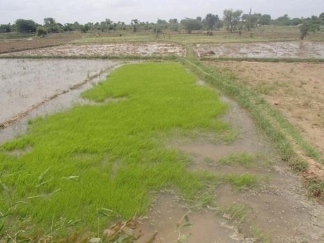 Irrigation et changement climatique en Inde du Sud | Actualité des laboratoires du CNRS en Midi-Pyrénées | Scoop.it