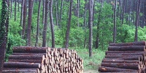Le bois a retrouvé son prix d'avant Klaus | Agriculture en Dordogne | Scoop.it
