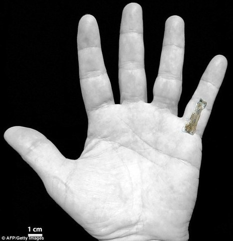 1.85m year old little finger bone that could rewrite human evolution | University of Kent in the News | Scoop.it