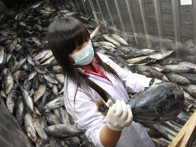 Fukushima fish carrying 258 times the 'safe' level of radiation — RT | promienie | Scoop.it