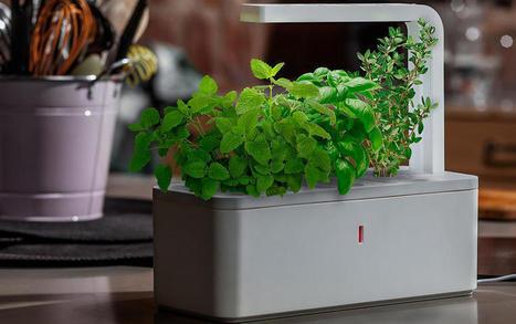 Smart Herb Garden: una mini-huerta inteligente en tu cocina - Adslnet.es | Horticultura | Scoop.it