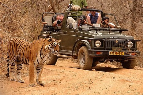 Golden Triangle Tour With Ranthambore | Golden Triangle India Trip | Scoop.it