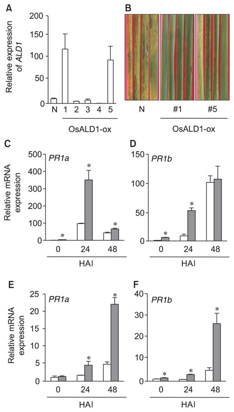 A Rice Gene Homologous to Arabidopsis AGD2-LIKE DEFENSE1 Participates in Disease Resistance Response against Infection with Magnaporthe oryzae | Rice Blast | Scoop.it