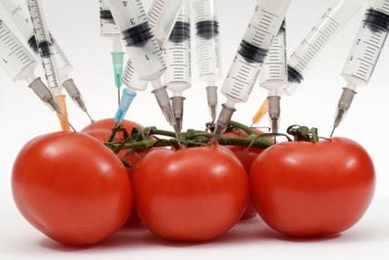 Gran debate sobre los alimentos transgénicos - Nutricion.pro   Stop Monsanto   Scoop.it