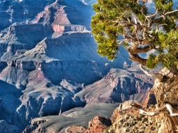 The Grand Canyon Will Help You Discover Relatives You Never Knew You Had | Grand Canyon Vacation | Scoop.it