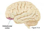 Grosse tête = Réseau socialimportant? | Fonctionnement du cerveau & états de conscience avancés | Scoop.it