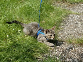 Advaita: Het kittentuigje, kitten onder toezicht naar buiten. | Advaita | Scoop.it