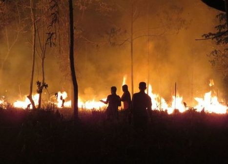 Can Indonesia's forest fires be put out for good? - BBC News | Farming, Forests, Water, Fishing and Environment | Scoop.it