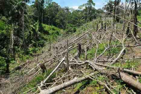 NATURA - MEDIO AMBIENTAL ©: Según expertos, bosques de Colombia durarán menos de 100 años | Sector forestal en Colombia | Scoop.it
