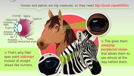 Как животние видят мир / How animals see the world: Infographic | природа | Scoop.it
