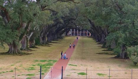 Couple in mystery marriage proposal identified | WBRZ News 2 Louisiana : Baton Rouge, LA | | Oak Alley Plantation: Things to see! | Scoop.it