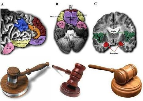 How should the law respond to the findings of neuroscience? | Philosophy everywhere everywhen | Scoop.it