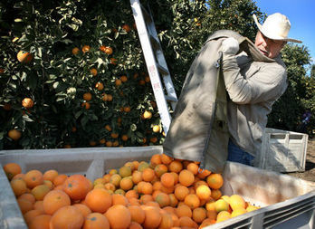 Cold still threatens crops in West - journal-news.net | The Journal (Martinsburg, WV) | CALS in the News | Scoop.it