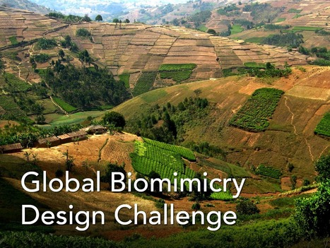 Global Biomimicry Design Challenge: Food Security | The Integral Landscape Café | Scoop.it