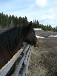 Wood Chewing Horses - Causes, Prevention and Possible Solutions | all things horsey | Scoop.it