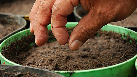 5 Essentials for Maximizing Results From Seed Capital | Pitch it! | Scoop.it