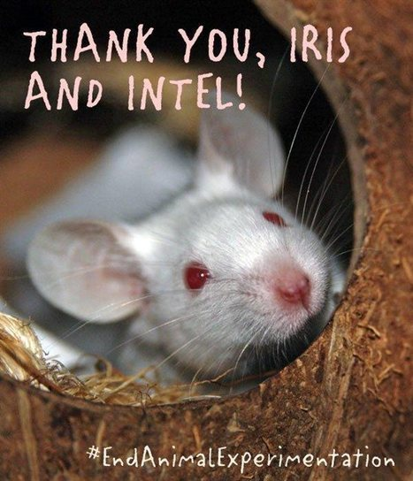No Animal Experiments for IRIS Science Fair   Animal Science   Scoop.it