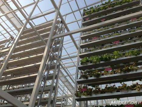 First commercial vertical farm opens in Singapore - Channel News Asia | Cultivos Hidropónicos | Scoop.it