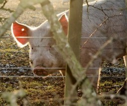 North Carolina Farmers Get Up To Speed on New Food-safety Rules | North Carolina Health News | North Carolina Agriculture | Scoop.it