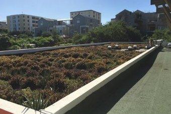 La savane s'invite sur les toits de la Réunion | Toitures végétales & Biodiversité urbaine | Scoop.it