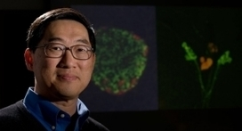 Researchers discover novel insulin-decreasing hormone in flies and now humans | Amazing Science | Scoop.it