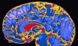 Childhood stimulating key to Brain development | Neurolinguistics | Scoop.it