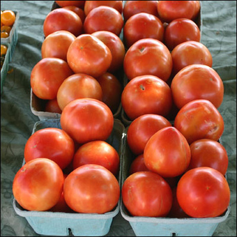 8 Reasons Never to Buy Another Winter Tomato | YOUR FOOD, YOUR HEALTH: Latest on BiotechFood, GMOs, Pesticides, Chemicals, CAFOs, Industrial Food | Scoop.it