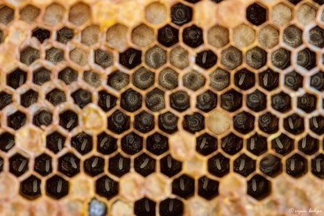 Soup Made Out Of Crushed Bees Could Be Key To Pollinator Survival - Tech Times | Agricultural Biodiversity | Scoop.it