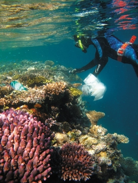 Climate-change adaptation: Designer reefs - Nature.com   Marine Eco-System Biology #Marine #SysBiol #Ecosystem   Scoop.it