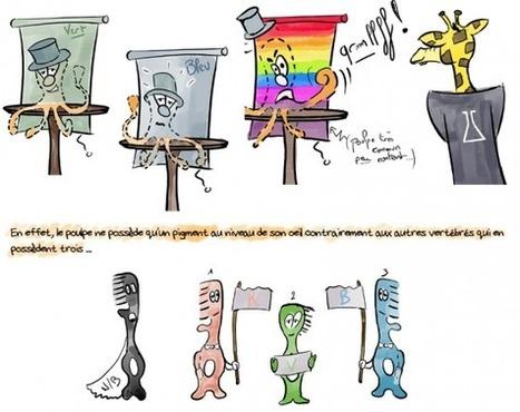 La vie en couleurs des céphalopodes - [Parlons peu parlons Science] | C@fé des Sciences | Scoop.it