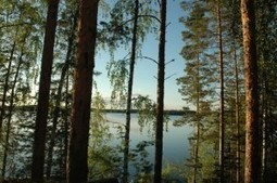 If you want to go gluten-free, go to Finland | A Sweet Life|A Sweet Life | diabetes and more | Scoop.it
