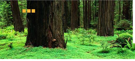 Redwood Deck Preservin   Cal Preserving   Scoop.it
