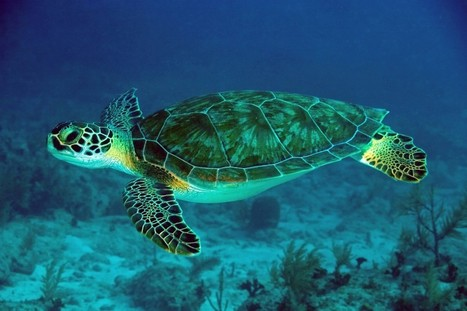 LED 'Turtle Friendly' Lighting Saves 1000s During Nesting Season | The world of LEDs | Scoop.it