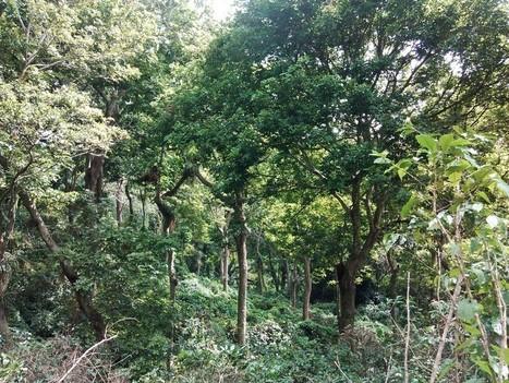 The Biodiversity of Shade Grown Coffee - EcoFriendly Coffee | GarryRogers Biosphere News | Scoop.it