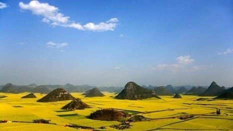 Landschaft und Agrikultur: Was nicht wächst, muss weichen | Agrarforschung | Scoop.it