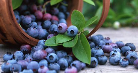Blueberries' Polyphenol Content Altered Through Baking - BrightSpring | BrightSpring and Delicious Food | Scoop.it