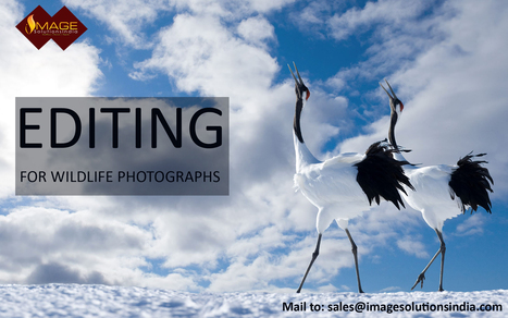 Wildlife Photo Enhancement Services – Outdoor photography editing services | Outsource image editing services, Image Editing Services | Scoop.it