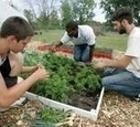 Urban Farming | Rust Wire Sharing successes. Debating Problems. Connecting advocates. | Vertical Farm - Food Factory | Scoop.it