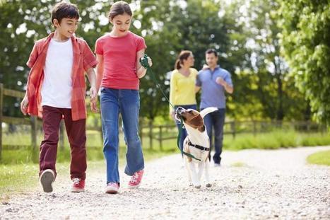 Lær barna hundespråket Dempende signaler: Hunden kommuniserer - Klikk.no | Dyr, animals, behaviour and training | Scoop.it