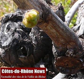 Vigne de printemps : un peu, beaucoup, passionnément, à la folie, débourrement ! | Le meilleur des blogs sur le vin - Un community manager visite le monde du vin. www.jacques-tang.fr | Scoop.it