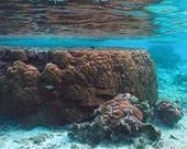 Coral Reefs are Critical for Risk Reduction and Adaptation | Sustain Our Earth | Scoop.it