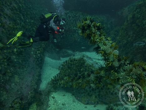 Weekend Dive Report: Tropical Diving in Simon's Town | Indigo Scuba | Indigo Scuba | Scoop.it