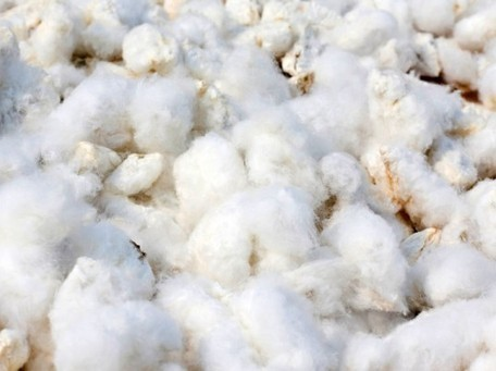 """Fund """"Dirty White Gold,"""" a Film That Exposes Cotton Farming's Dark Side 