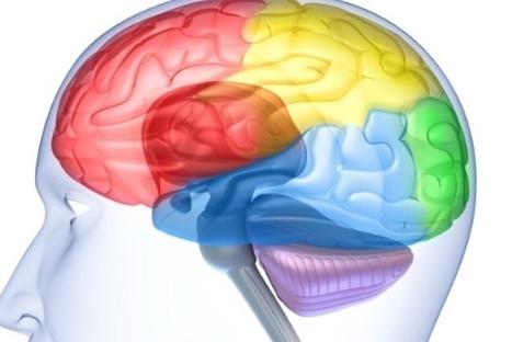 Estudo explica como os videojogos alteram o cérebro | Descobertas científicas sobre o cérebro | Scoop.it