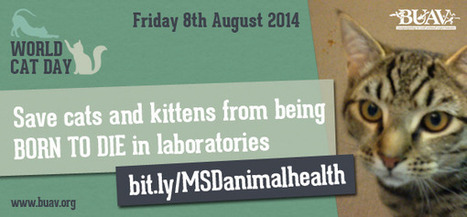 England:  8/8/14 Is 'World Cat Day' - The BUAV Exposes Cats Born To Die In UK Labs - Watch the Footage, Please Sign the Petition - and Lots More. | GarryRogers Biosphere News | Scoop.it