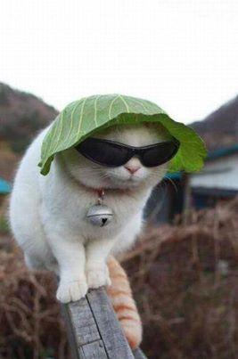 Smart cat   Photography   Scoop.it